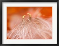 Framed Seedheads Dancing, New Hampshire
