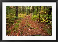 Framed New Hampshire, White Mountains, Forest Path