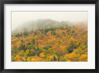 Framed New Hampshire, White Mountain National Forest, Autumn