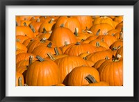 Framed Pumpkins in Concord, New Hampshire