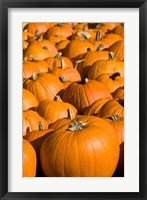 Framed Pumpkins in the city of Concord, New Hampshire