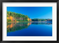 Framed White Pines and Hardwoods, Meadow Lake, New Hampshire