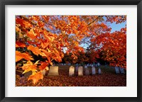 Framed Fall Morning in a Portsmouth Cemetary, New Hampshire