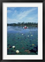 Framed Fragrant Water Lily, Kayaking on Umbagog Lake, Northern Forest, New Hampshire
