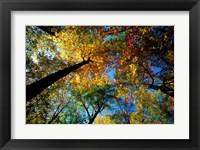 Framed Northern Hardwood Forest, New Hampshire