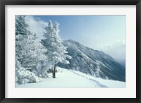 Framed Snow Covered Trees and Snowshoe Tracks, White Mountain National Forest, New Hampshire