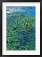 Framed Water Lilies, New Hampshire