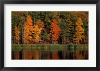 Framed Wetlands in Fall, Peverly Pond, New Hampshire