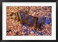 Framed Fall Leaves and Reflections, Nature Conservancy Land Along Crommett Creek, New Hampshire