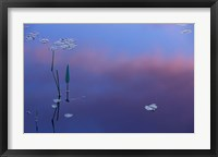 Framed Pickerelweed, Lily Pads and Reflections in Trout Pond, Freedom, New Hampshire