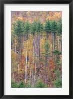 Framed White Mountains in Fall, New Hampshire