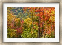 Framed Forest in Grafton, New Hampshire