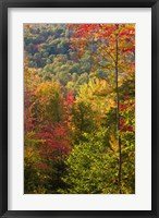 Framed Fall in a Forest in Grafton, New Hampshire