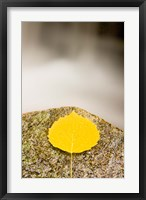 Framed aspen leaf next to a stream in a Forest in Grafton, New Hampshire