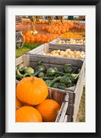 Framed Pumpkins and gourds at the Moulton Farm, Meredith, New Hampshire