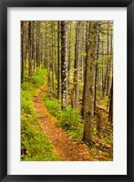 Framed trail around Ammonoosuc Lake, White Mountain National Forest, New Hampshire
