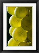 Framed Candia Vineyards, New Hampshire