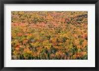 Framed New Hampshire, White Mountains, Autumn