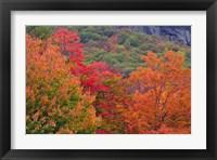 Framed Bemis Falls Trail, Crawford Notch State Park, New Hampshire