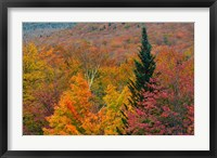Framed Autumn at Flume Area, Franconia Notch State Park, New Hampshire
