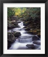 Framed Gordon Water Falls, Appalachia, White Mountains, New Hampshire