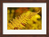 Framed New Hampshire, Fern frond flora