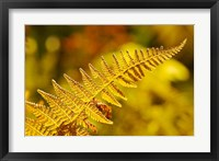 Framed New Hampshire, Fern frond flora