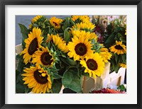 Framed Market Sunflowers, Nice, France
