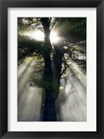 Framed New England, New Hampshire, Sunlight Through Trees