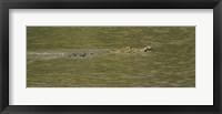 Framed Crocodile in a River, Palo Verde National Park, Costa Rica