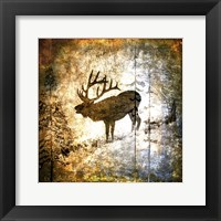 High Country Elk Framed Print