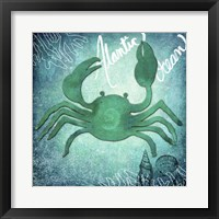 Framed Alantic Ocean Crab