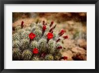 Framed Desert Flower 3