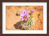 Framed Desert Flower 4