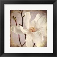Framed Paper Magnolia Closeup