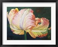Framed Flaming Parrot Tulip