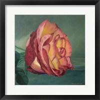 Framed Rose is a Rose 2