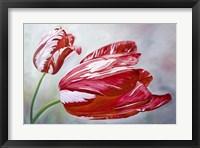Framed English Tulips