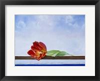Framed Tulip at Sea