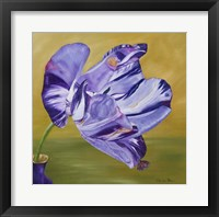 Framed Blue Lady Virus Tulip