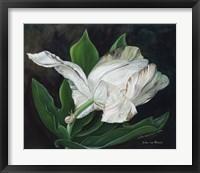 Framed Gletcher Tulip