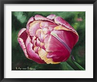 Framed Mama Mia Tulip