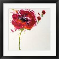Framed Poppy Master on White