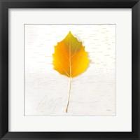 Framed Autumn Colors III