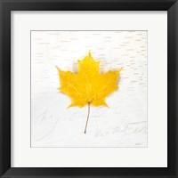 Framed Autumn Colors II