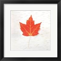 Framed Autumn Colors I