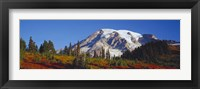 Framed Mt. Rainier and Fall Color, WA