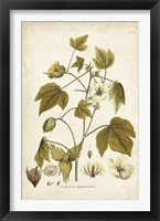 Framed Elegant Botanical I
