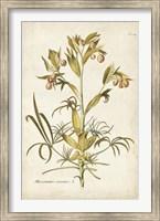 Framed Elegant Botanical II