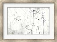 Framed Poppy Sketches II